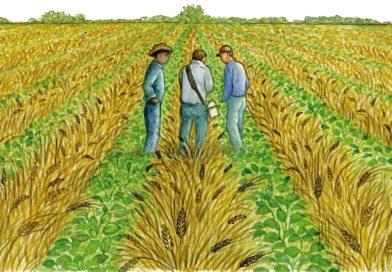 Agro Advisory